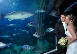 AquaDom Berlin | JA! Hochzeitsportal